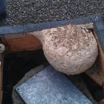 Melkoinen ampiaispesä katolla
